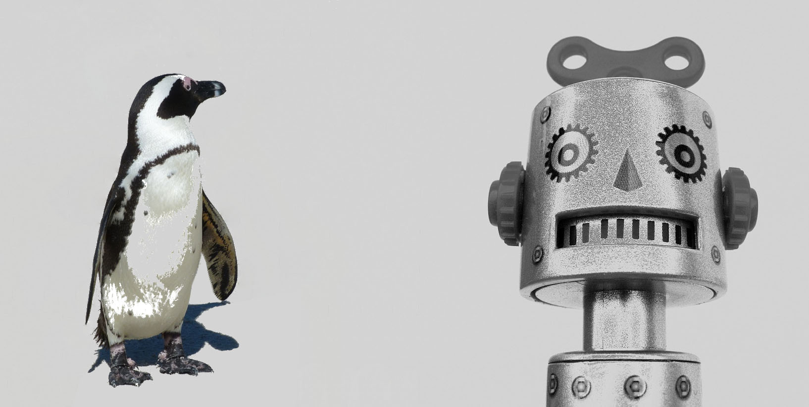 Penguin looking at robot